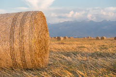 Hay Rolls empacotado no por do sol Fotos de Stock Royalty Free