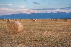 Hay Rolls empacotado no por do sol Fotografia de Stock Royalty Free