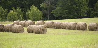 Hay rolls in a farmers pasture Stock Photos