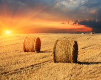 Hay rolls on farming field. Evening sunset scene with hay rolls on farming field royalty free stock photography