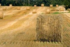 Hay rolls in the field. Hay rolls in a farmer's field Royalty Free Stock Photography