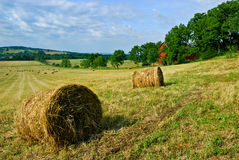 Hay rolls in field Stock Photo