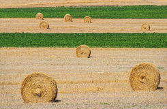 Hay Rolls in Field Stock Images