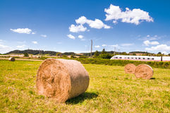 Hay rolls on the field Royalty Free Stock Image