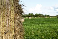 Hay rolls on the field Royalty Free Stock Images