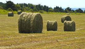 Hay Rolls at Harvest. These are newly formed hay rolls at harvest time Stock Photography