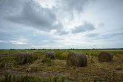 Hay Rolls i Paddy Field Royaltyfri Foto
