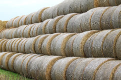 Hay rolls in Knävången, Falsterbo, Sweden Stock Images