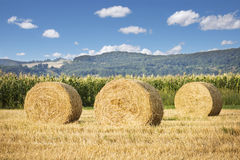 Hay Rolls Lanscape Royalty Free Stock Photography