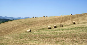 Hay rolls in a mown field Stock Images