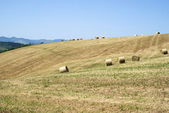 Hay rolls in a mown field Royalty Free Stock Photography