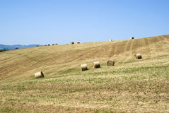 Hay rolls in a mown field Royalty Free Stock Image