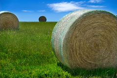 Hay Rolls in Paddock Royalty Free Stock Photos