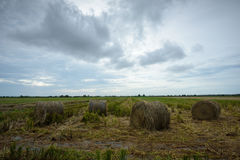 Hay Rolls in Paddy Field Royalty Free Stock Photo