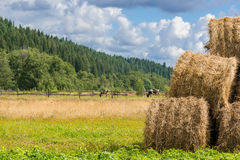 Hay rolls piled on a farm next to cow pasture Royalty Free Stock Photography