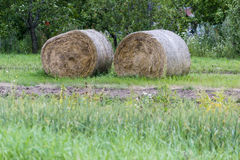 Hay rolls prepared for winter for cows and other farm animals. In village countryside hay rolls waiting to be picked up to feed in winter farm animals Stock Photos