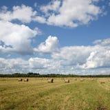 Hay rolls Stock Image
