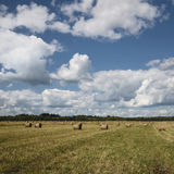 Hay rolls Royalty Free Stock Photography