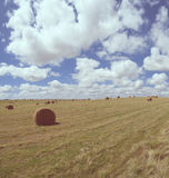 Hay rolls on rural country landscape Royalty Free Stock Photos