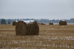 Hay rolls in the snow on a plowed field. Big hay rolls in the snow on a snow-covered empty plowed field Royalty Free Stock Images