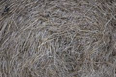 Hay rolls in the snow on a plowed field. Big hay rolls in the snow on a snow-covered empty plowed field Stock Photos