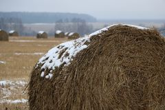 Hay rolls in the snow on a plowed field. Big hay rolls in the snow on a snow-covered empty plowed field Stock Photography