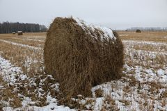 Hay rolls in the snow on a plowed field stock photo