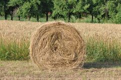 Hay rolls. Spectacular golden field with round hay rolls royalty free stock image