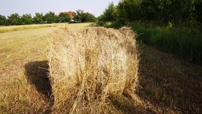 Hay rolls. Spectacular golden field with round hay rolls royalty free stock photo