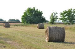 Hay rolls. Spectacular golden field with round hay rolls stock photography