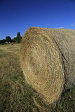 Hay Rolls Royalty Free Stock Image