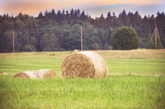 Hay rolls on summer meadow Royalty Free Stock Photography