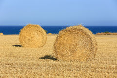 Hay rolls under blue sky Stock Image