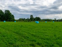 Hay rolls wrapped in the blue color plastic royalty free stock images