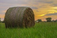 Hay Round Bale Royaltyfria Foton