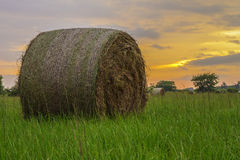 Hay Round Bale Royalty Free Stock Photos
