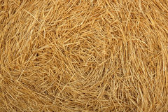 Hay round bale of dried wheat cereal Stock Photo