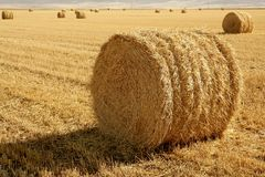 Hay round bale of dried wheat cereal Stock Photography