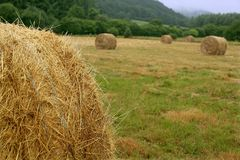 Hay round bale of dried wheat cereal Royalty Free Stock Image