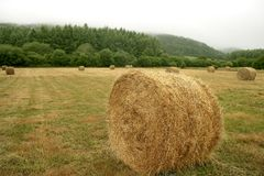 Hay round bale of dried wheat cereal Stock Images