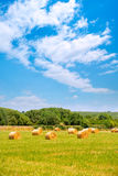 Hay round bale greenfield  cereal plants in sunny day Royalty Free Stock Photo
