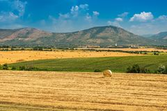 Hay and round bales on the wheat field after harvest. Italy Stock Images
