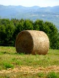 Hay's roll Stock Images