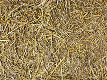 Hay seamless background. Royalty Free Stock Image