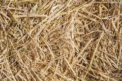 Hay seamless background Royalty Free Stock Images