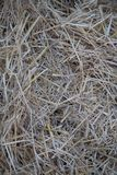 Hay seamless background texture dry royalty free stock photo