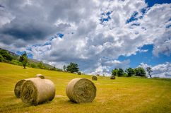 Hay Sheaf in a field Royalty Free Stock Photography