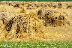 Hay Stack. Tradition historic method to harvest wheat and for hay horse feed Stock Photo