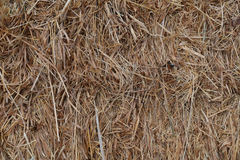 Hay Stack 1 Photos stock