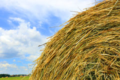 Hay stack close-up Royalty Free Stock Photo